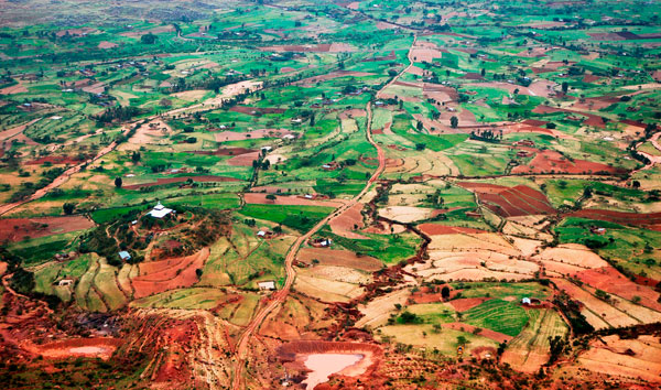 Turning the tide in Tigray | Evolution Online