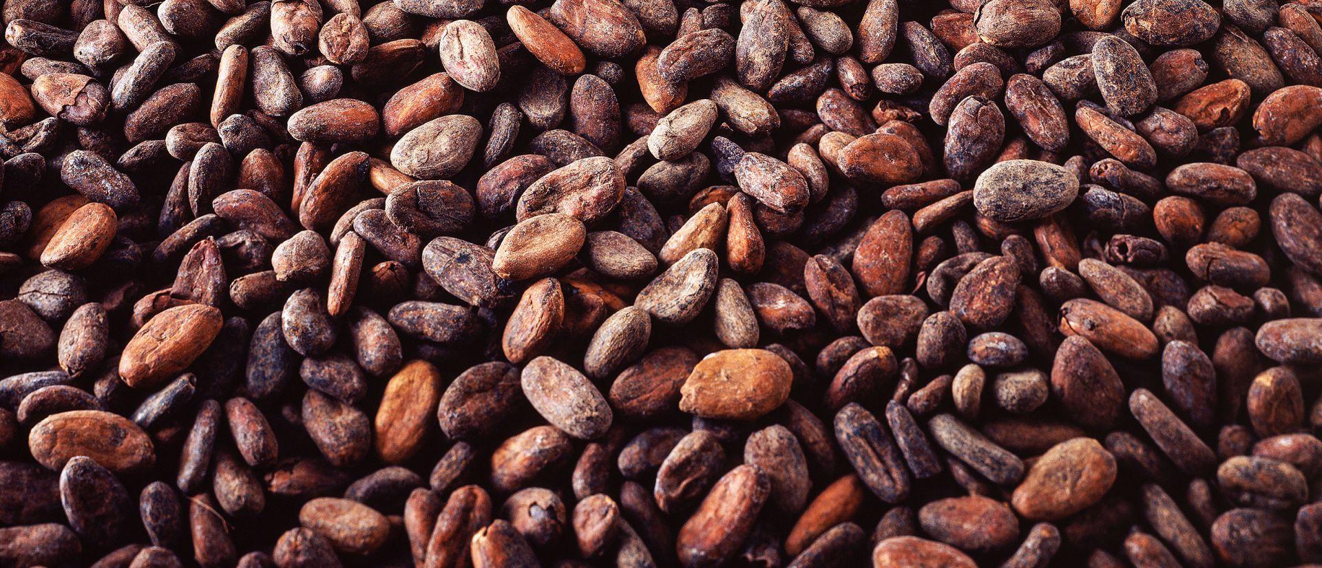 Cargill Cacao et Chocolat France