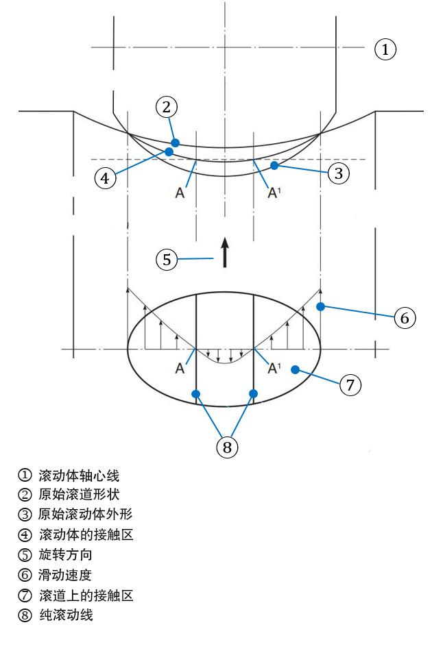 图4a:滚动体与滚道曲面的接触以及对弹性变形的影响。 此图描述了滑动产生的原因。