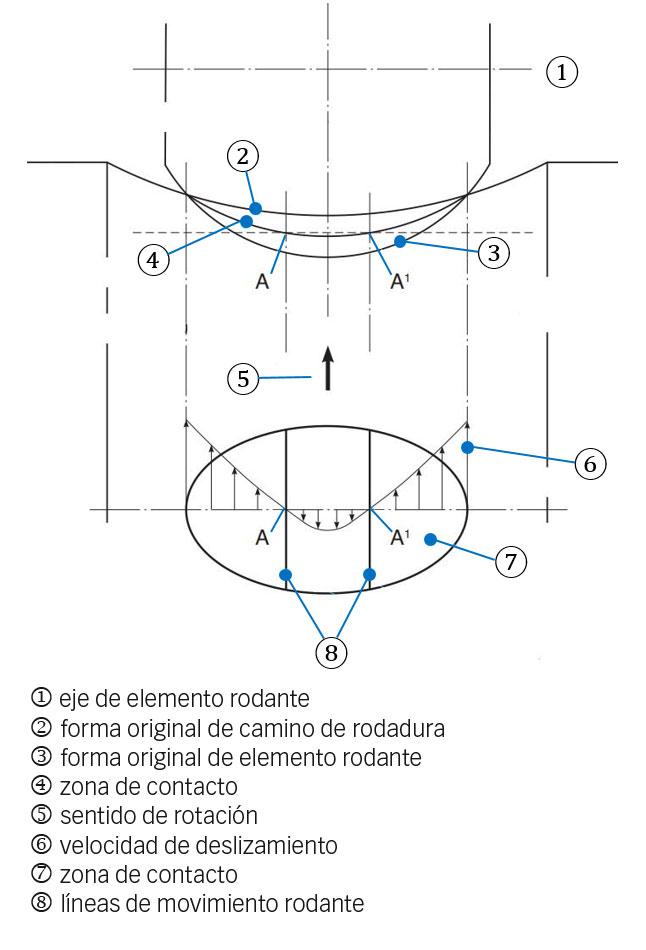 Fig. 4a: Contacto del elemento rodante con el camino de rodadura en una superficie de contacto curva, e influencia de la deformación elástica. Esto describe cómo se forma el deslizamiento.