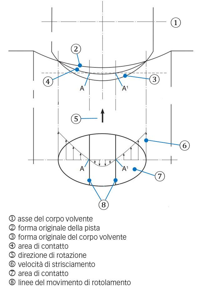 Fig. 4a: Contatto della pista del corpo volvente con una superficie di contatto curva e influenza della deformazione elastica. La figura mostra come si crea strisciamento.