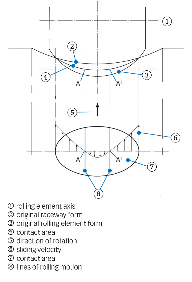 Fig. 4a: Rolling element raceway contact with a curved contact surface and the influence of elastic deformation. This depicts how sliding is produced.
