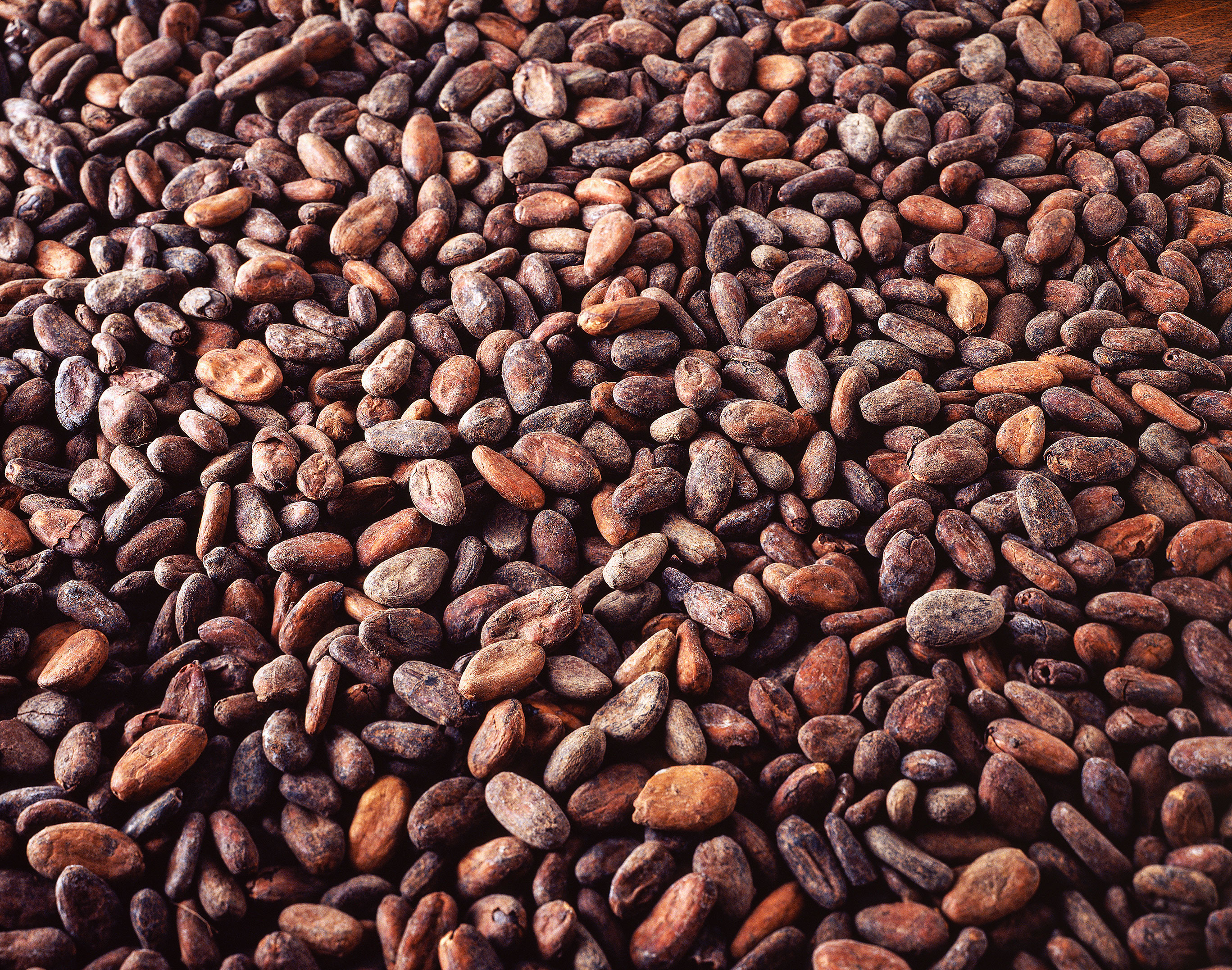 Cargill производит различную продукцию из какао и шоколада.